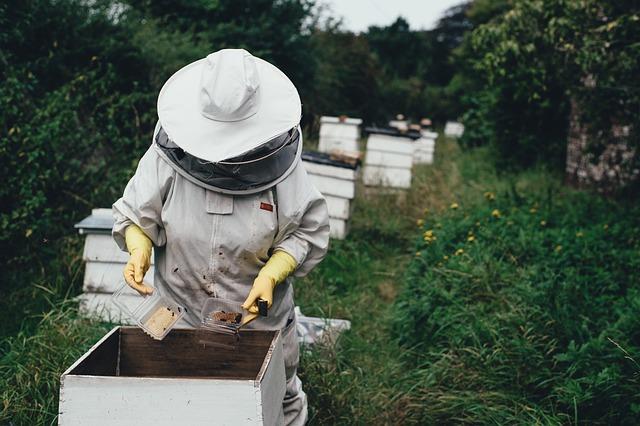 včelí farma