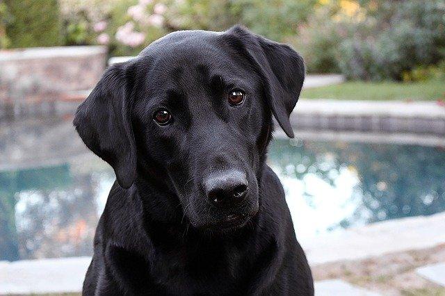 pes před bazénem